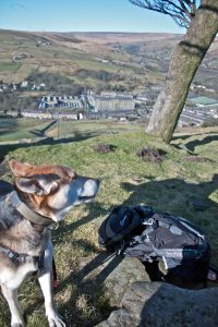 photo of dog above Marsden 3 Trees area