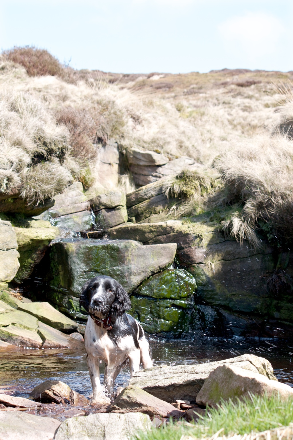 photograph of a section of the ramble from Crowden to Laddow Rocks circular walk