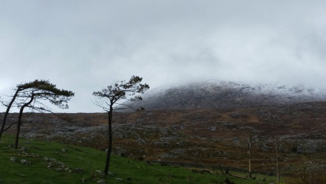 Beinn Dhub with wind blown trees